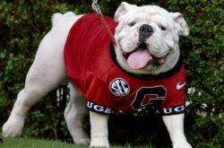 Georgia Bulldogs Bars